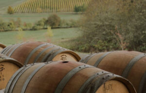 Oak barrels in picturesque vineyard estate